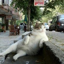 Chill_Cat-280