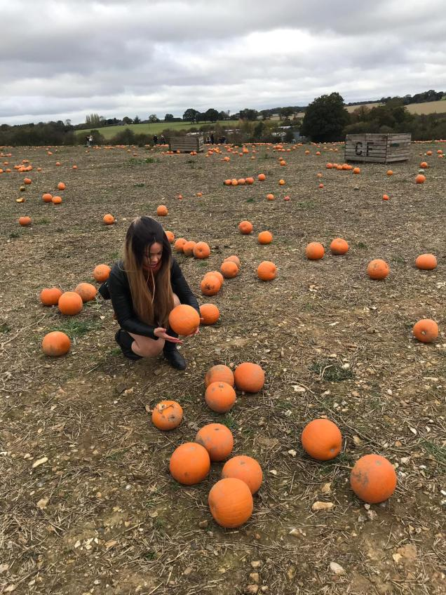 pumpkin picking for halloween