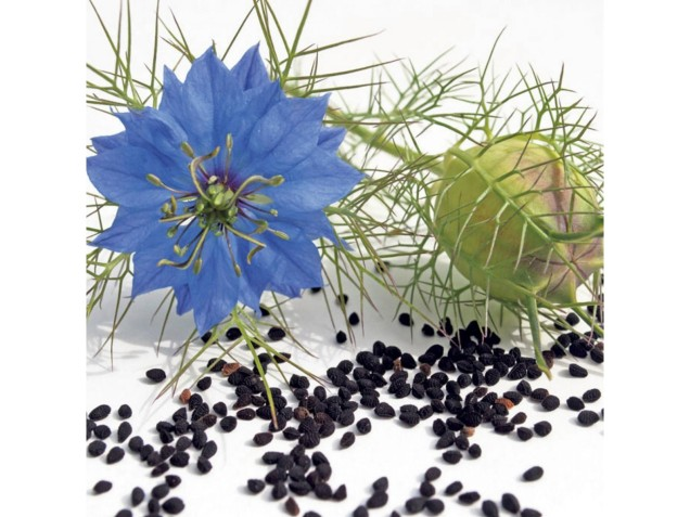 black caraway seeds nigella sativa